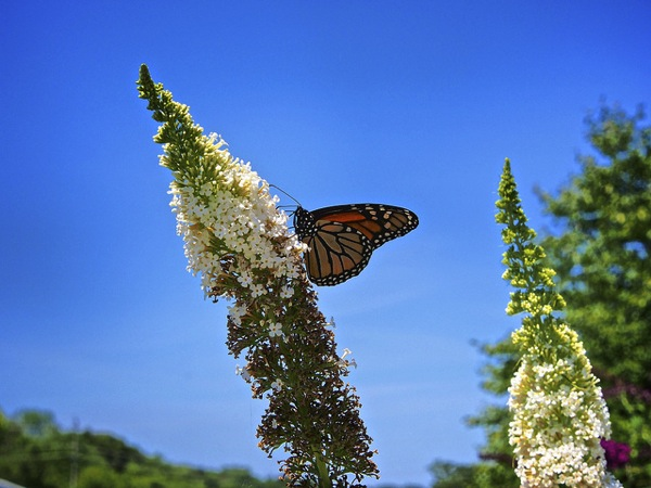Butterfly by Ozont, on Flickr